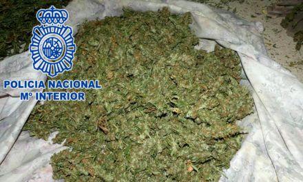 La Policía Nacional desmantela una plantación y secadero de marihuana en Jaén