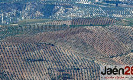 Diputación recalca a ICOMOS los valores que atesoran los Paisajes del Olivar para ser Patrimonio Mundial