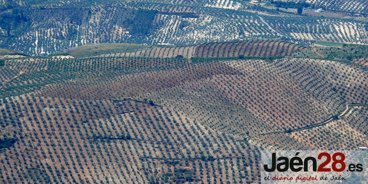 Jaén recibe 23,8 millones de euros en ayudas a titulares de explotaciones agrarias