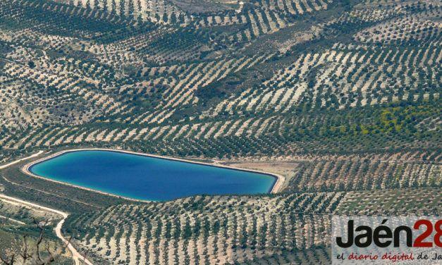La sequía ocasiona pérdidas de cosecha de hasta el 80% en el olivar de secano de Jaén