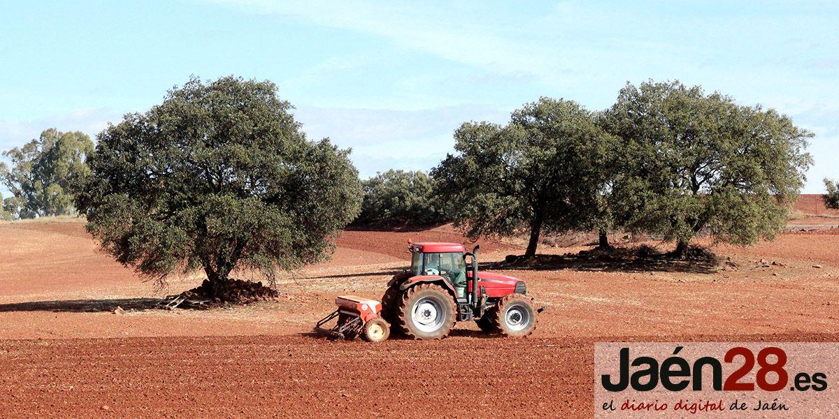 """Requena: """"El gobierno de la Junta demuestra una vez más su compromiso con la creación de empleo y el campo andaluz"""""""