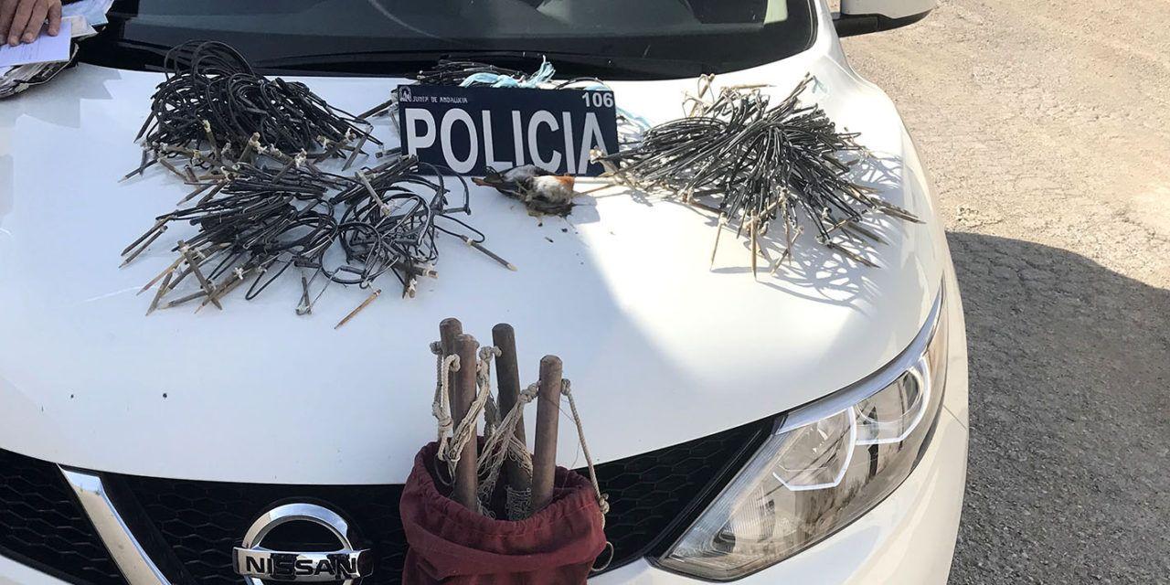 La Policía de la Junta denuncia a un vecino de Jaén por la captura de aves fringílidas de manera ilegal