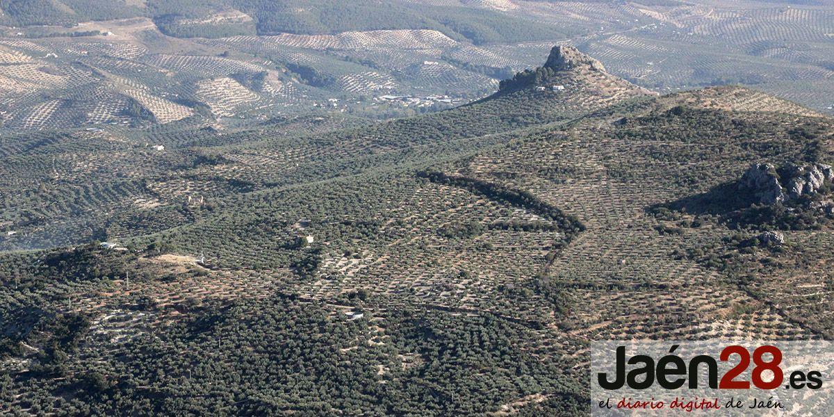 El Ayuntamiento de Jaén muestra su apoyo a la manifestación en Madrid en defensa del Olivar