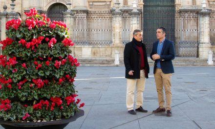 4.000 flores engalanarán la ciudad por Navidad