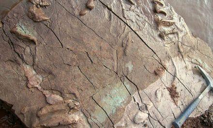 Investigadores de las Universidades de Jaén y Valencia descubren huellas de tortugas fósiles de hace 227 millones de años situadas en la Cordillera Ibérica