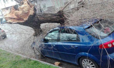 La Policía Local ha atendido un total de 56 incidencias producidas por la intensidad del viento y lluvia