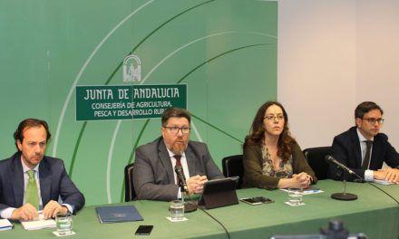 Llega a Andalucía la temida bacteria 'Xylella fastidiosa', letal para el olivo