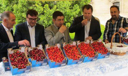 La Carolina degustará la cereza en la VI Muestra Provincial que revaloriza la producción jiennense