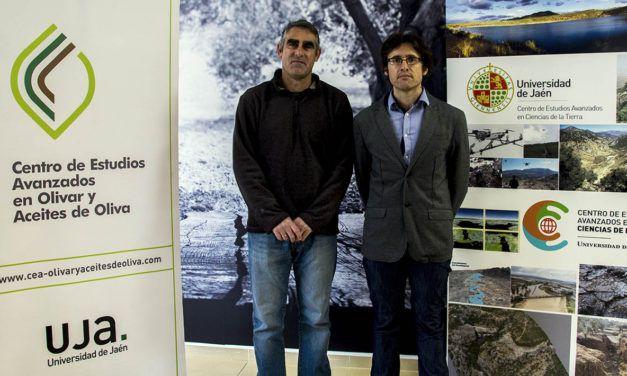 La Universidad de Jaén coordinará un proyecto para la mejora de la sostenibilidad del olivar y la gestión de los subproductos de las almazaras