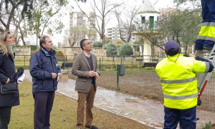 Jaén declara la guerra a la procesionaria