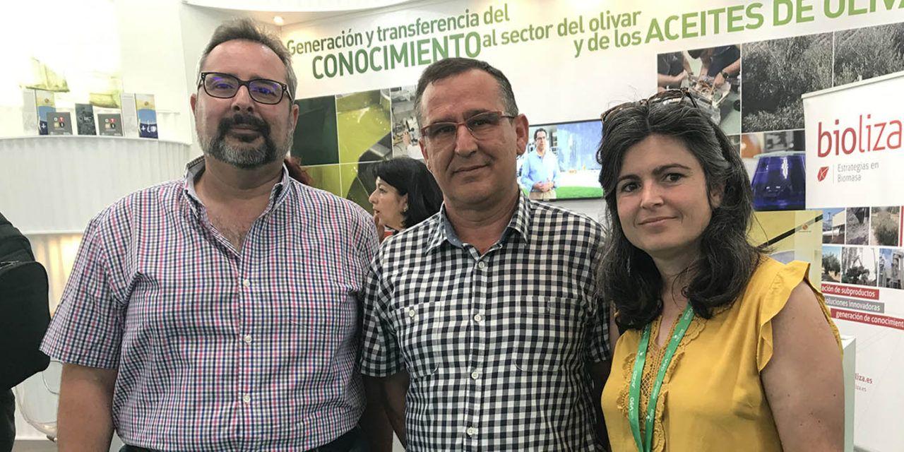 Ponen en marcha un proyecto innovador sobre la implantación de cubiertas herbáceas en diferentes tipos de olivar