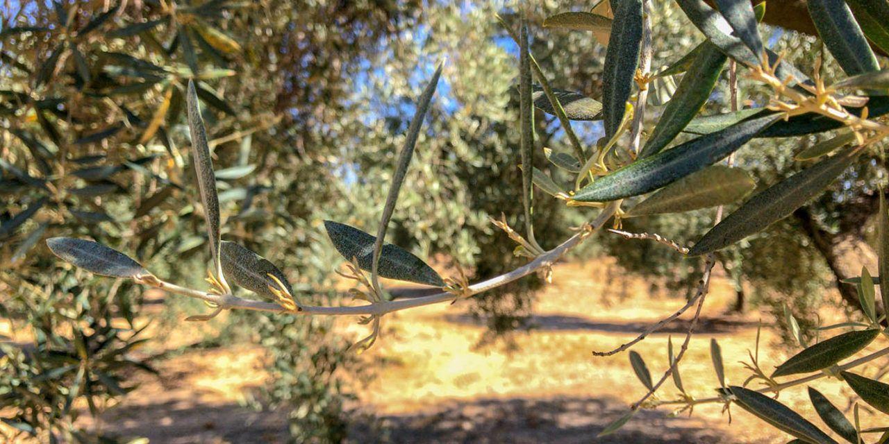 Se constituye una plataforma de afectados por herbicidas de preemergencia