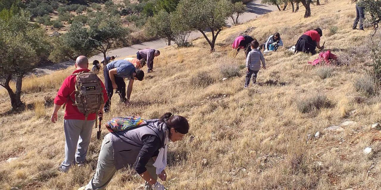 El Ayuntamiento colabora en una siembra de bellotas para concienciar sobre los efectos de la desertificación