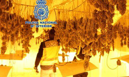 SUCESOS | La Policía Nacional desmantela una plantación de marihuana en una vivienda del término municipal de La Guardia