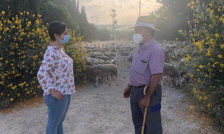 La Junta impulsa la ganadería extensiva con ayudas en pleno proceso de la trashumancia
