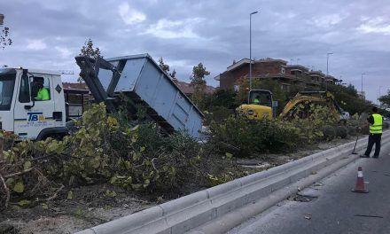 El Ayuntamiento acomete la renovación de la vegetación de las medianas de una de las principales arterias del Bulevar e instala por primera vez un sistema de riego para su mantenimiento