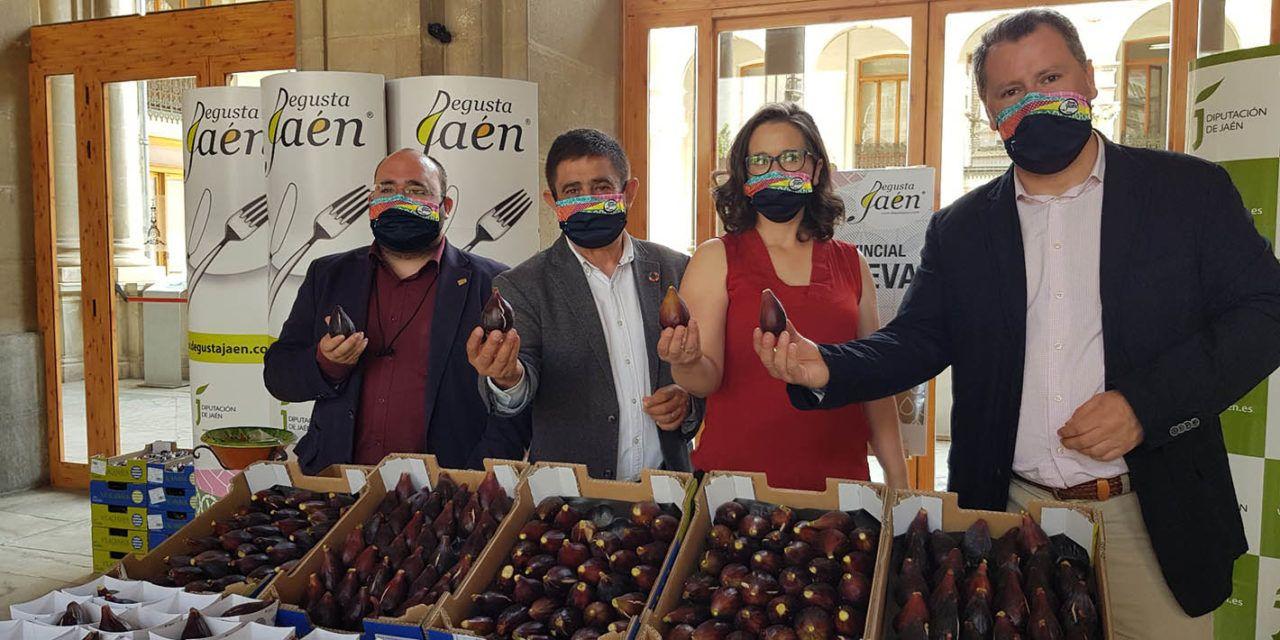 La VIII Muestra Provincial de la Breva de Jimena que organiza Diputación llegará a una decena de municipios jiennenses