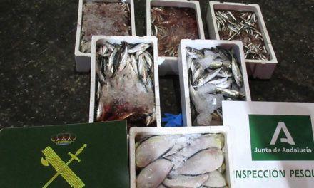 SUCESOS | Intervenidos 33 Kilogramos de pescado no apto para el consumo en 'MercaJaén'