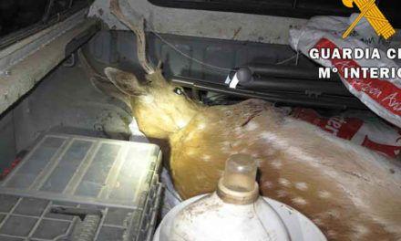 SUCESOS | La Guardia Civil detiene a dos personas que transportaban un gamo abatido en el interior de un vehículo