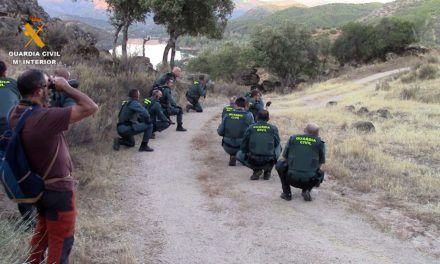 SUCESOS | Intervenidas 1.060 plantas de marihuana en plena Sierra Morena